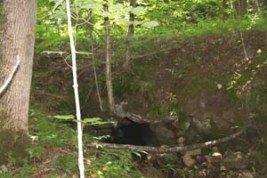The historic stone culvert on the Sawyer Mtn Road has served for over one hundred years.
