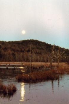 Moonlight shining above the Heath