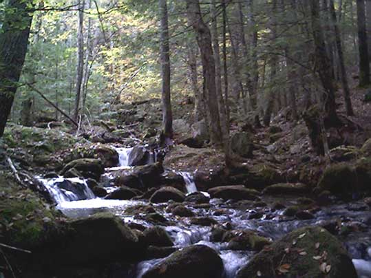 Pease Brook as viewed from the Jagolinzer Preserve