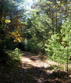 A woods road on the Poulin Preserve