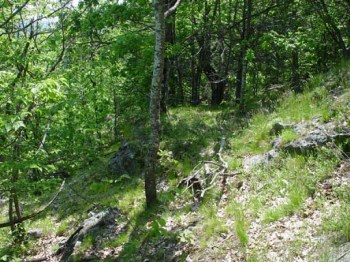 rare woodland communities