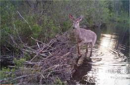 Wildlife Cam Shot #2