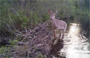 Wildlife Cam Shot #2